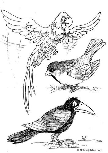 ara-gorrion-y-cuervo-t2887.jpg