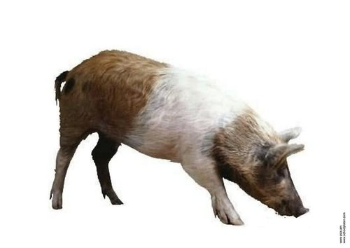 cerdo-t2910.jpg