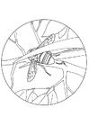 Dibujo para colorear Abejorro elimina el aguión