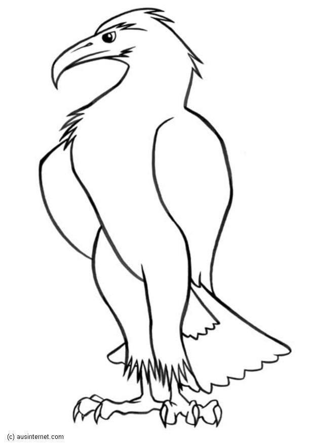 Increíble águila Calva Para Colorear Página Fácil Bosquejo - Dibujos ...