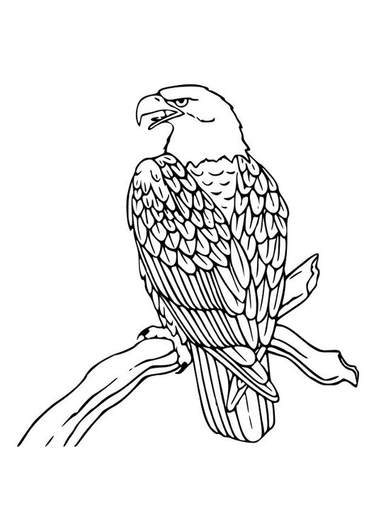 Dibujo Para Colorear águila Img 10535