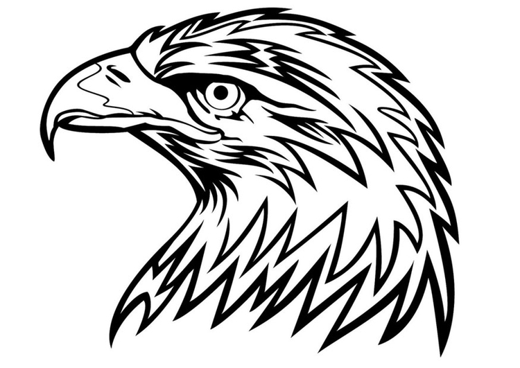 Dibujo para colorear águila - Img 24672