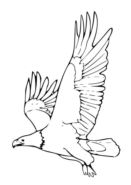 El Aguila Para Colorear Páginas Para Colorear Pájaros Salvajes ...