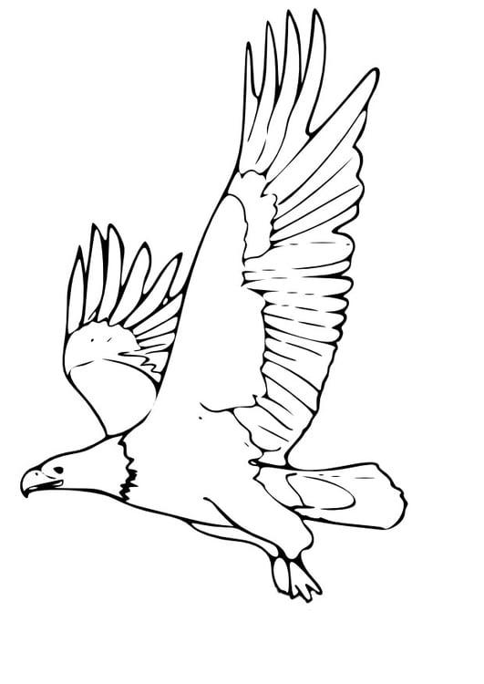 Dibujo para colorear Águila - Img 9965