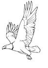 Dibujo para colorear Águila