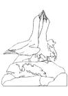 Dibujo para colorear Albatros bailando