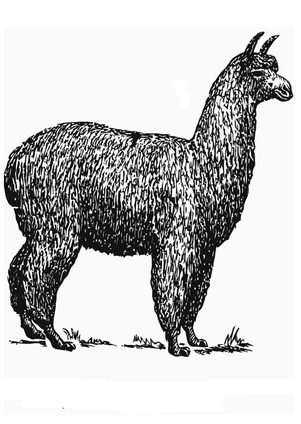 Dibujo para colorear Alpaca  Img 13706