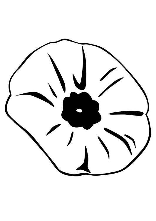 Dibujo para colorear amapola - Img 22891