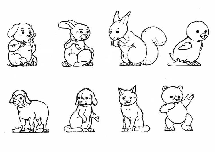 Dibujo para colorear Animales - Img 10923
