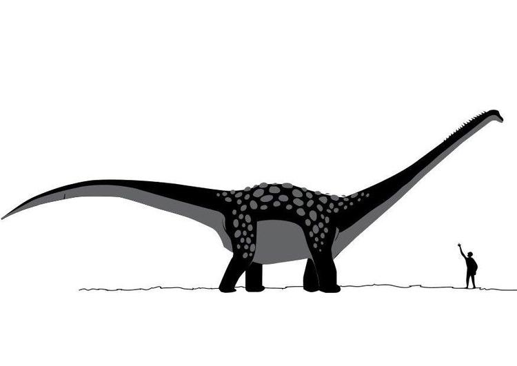 70 Dibujos De Dinosaurios Para Colorear Dibujos Para Imprimir Gratis Los dinosaurios son una grupo de reptiles que aparecieron en el periodo triasico, hace unos cuantos millones de años. 70 dibujos de dinosaurios para colorear