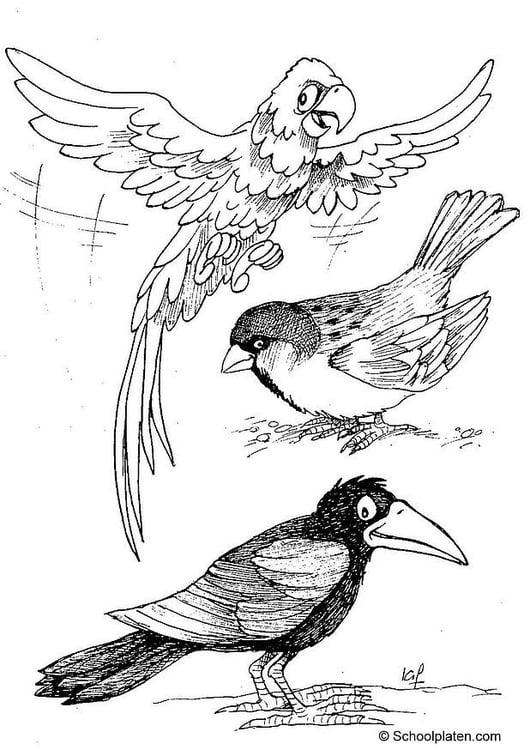 Dibujo Para Colorear Ara Gorrión Y Cuervo Img 2887