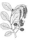 Dibujo para colorear árbol - alisa