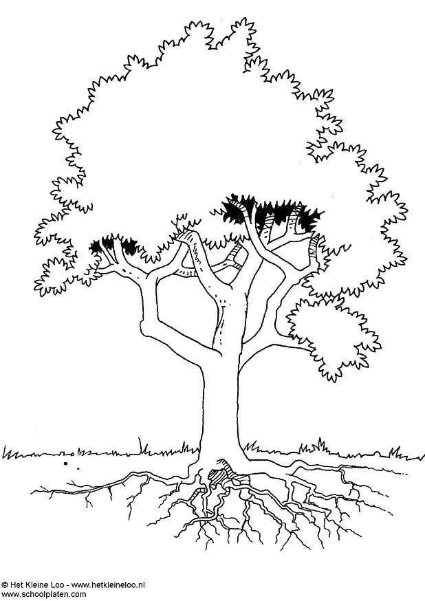 Dibujo para colorear Árbol - Img 3724