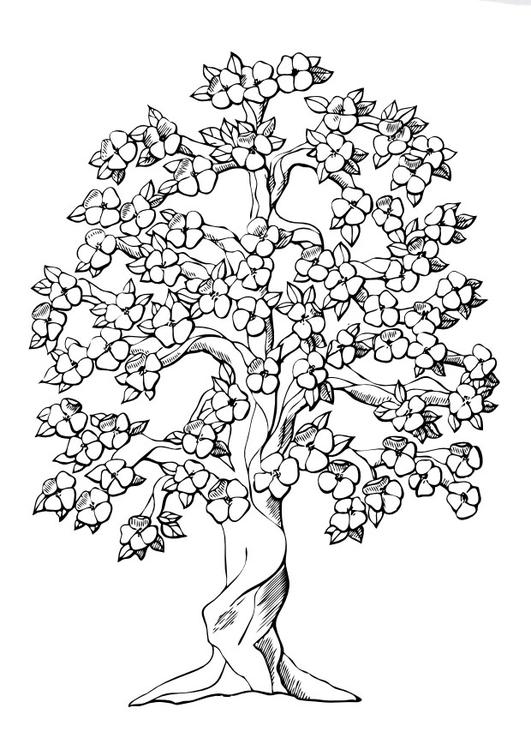 Dibujo para colorear Árbol en flor - Img 9980
