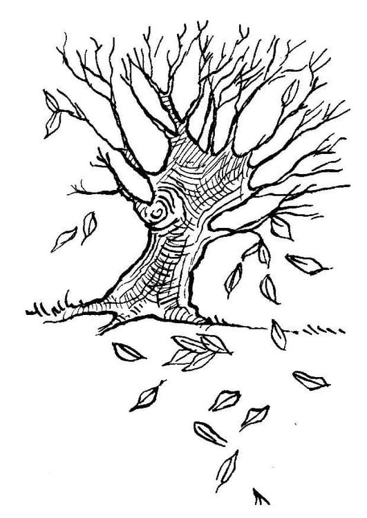 Dibujo para colorear Árbol en otoño - Img 7581