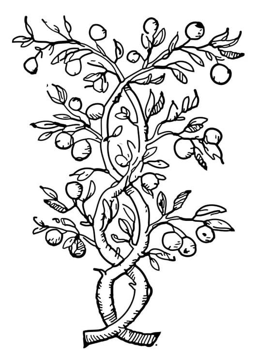 Dibujo para colorear árbol frutal - Img 27325