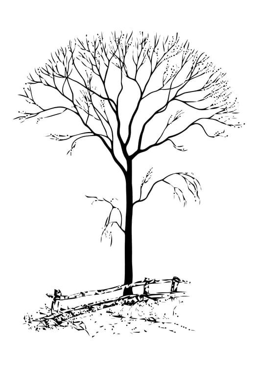 Dibujo para colorear Árbol sin hojas - Img 11411
