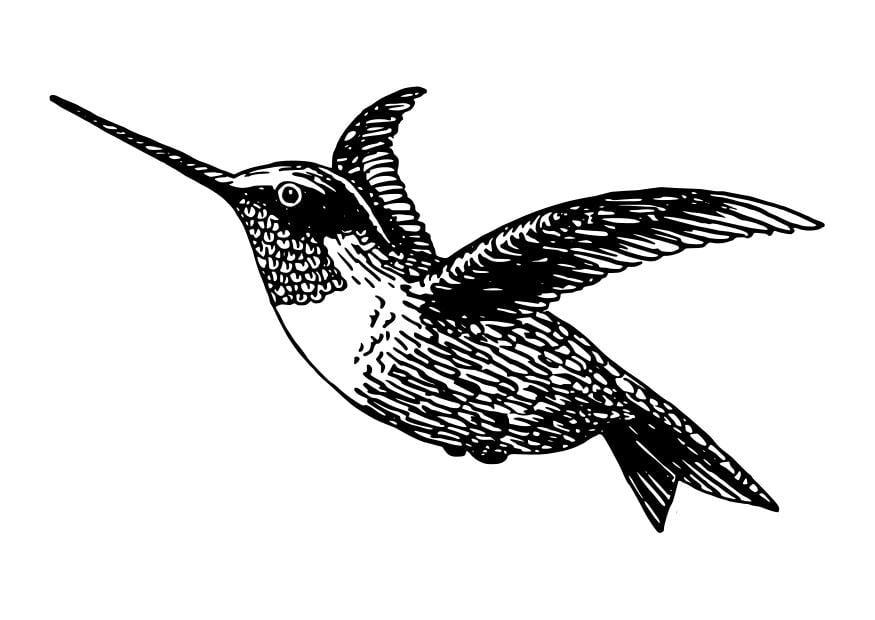 Dibujo para colorear ave - colibrí - Img 27798