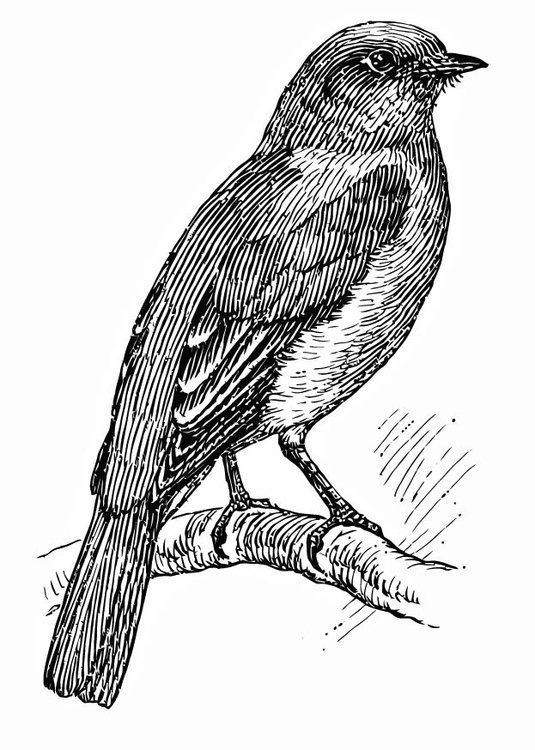 Dibujo para colorear Ave - pájaro azul - Img 15721