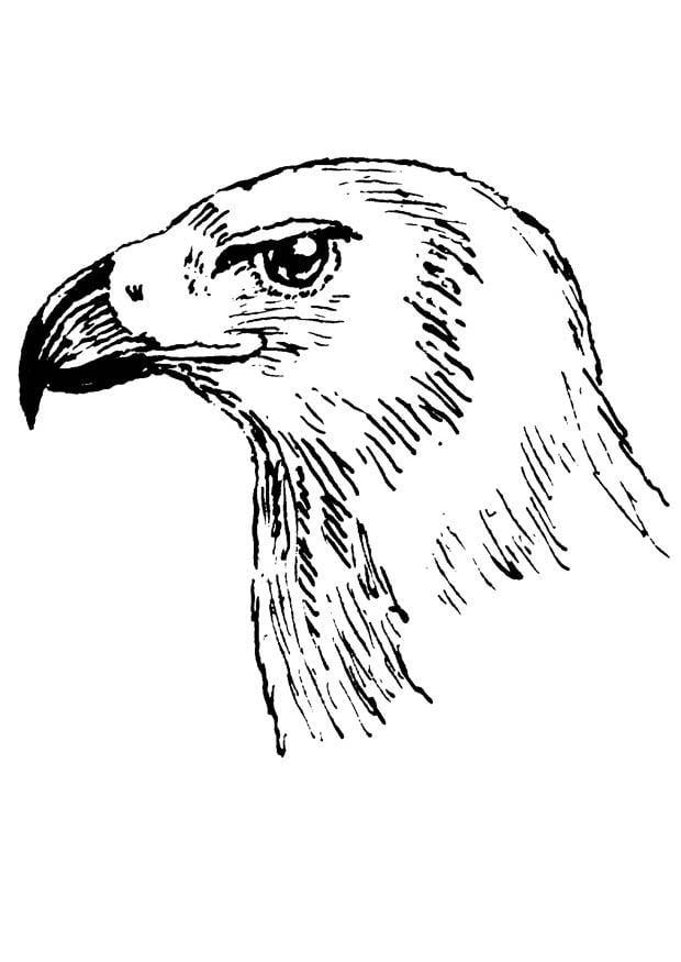 Dibujo para colorear ave rapaz  Img 18872