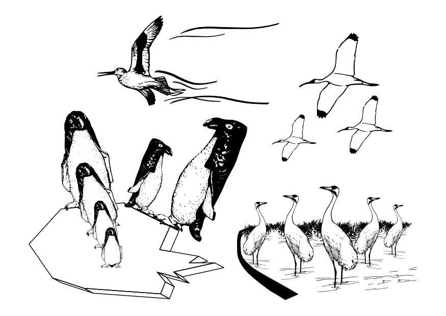 Dibujo para colorear aves marinas  Img 27326