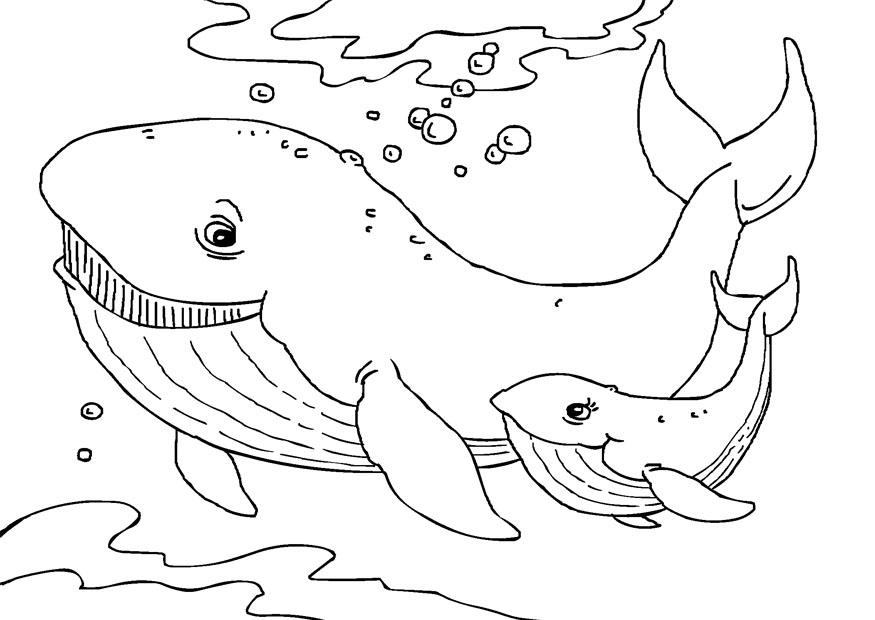 Dibujo para colorear ballenas