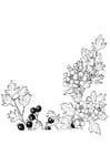Dibujo para colorear Bayas y flores