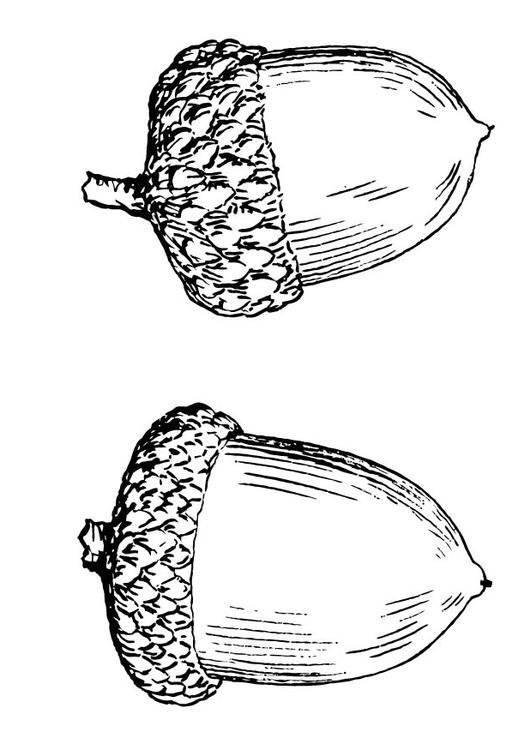 Dibujo para colorear Bellota - Img 15694