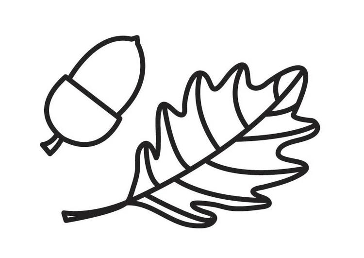 Dibujo para colorear bellota y hoja de roble - Img 18550