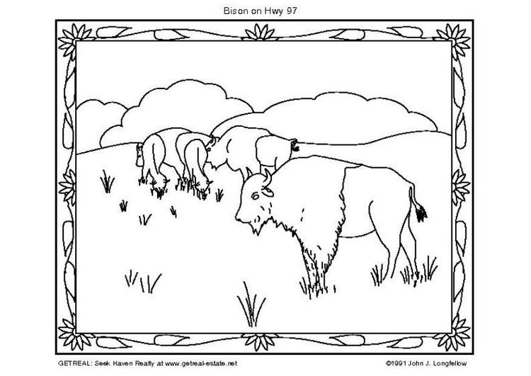 Dibujo para colorear Bisonte americano - Img 5751
