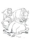 Dibujo para colorear Bisontes