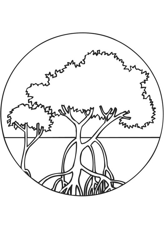 Dibujo Para Colorear Bosque De Mangle Img 9469