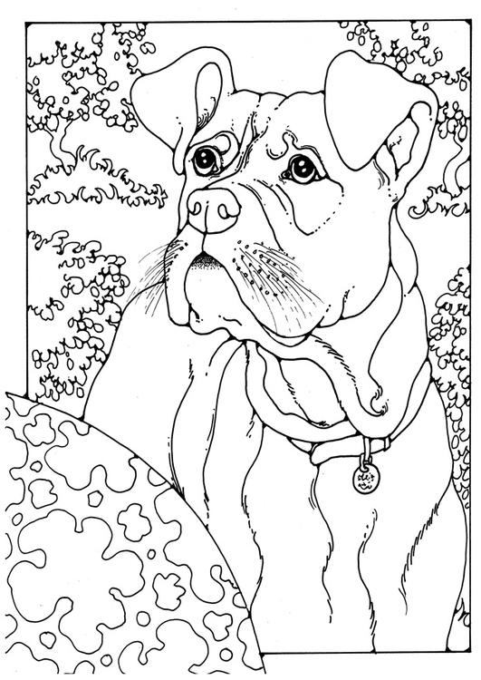 Dibujo Para Colorear Boxer Dibujos Para Imprimir Gratis