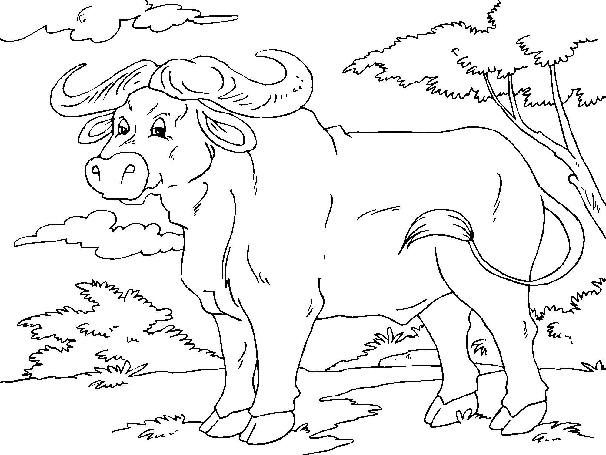 Asombroso Búfalo Para Colorear Imprimible Bandera - Dibujos Para ...