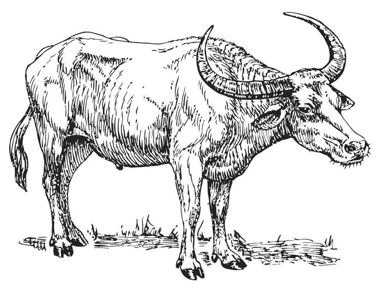 Dibujo para colorear Búfalo - Img 15701