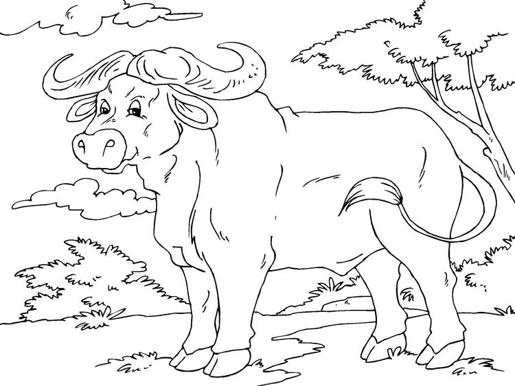 Dibujo para colorear búfalo - Img 23014