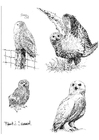 Dibujo para colorear Búhos nivales