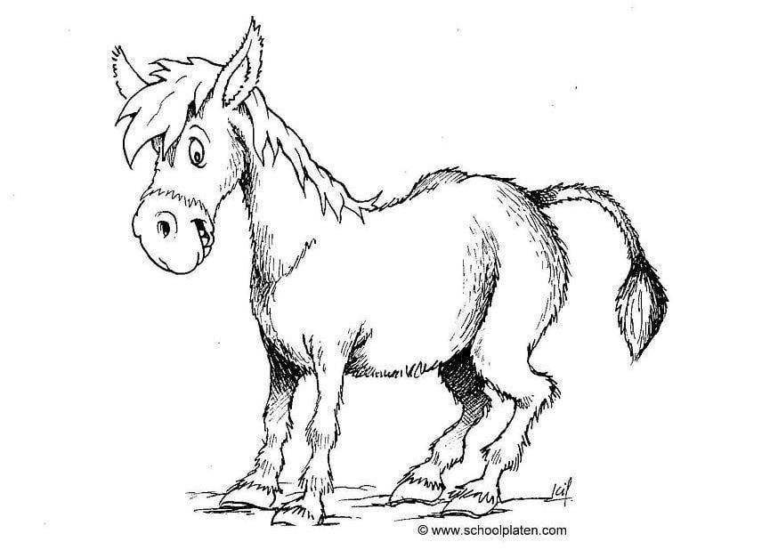 Dibujo para colorear Burro   Img 2870
