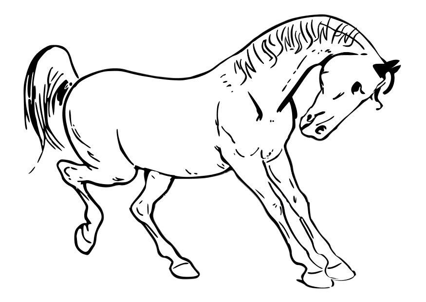 Dibujo para colorear Caballo - Img 10348