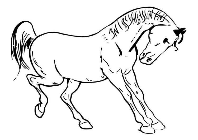 Dibujo Para Colorear Caballo Img 10348
