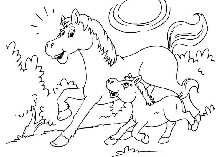 Dibujo para colorear caballo y potro - Img 25967