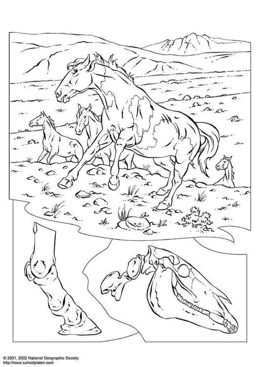 Dibujo para colorear Caballos salvajes - Img 3080