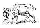 Dibujo para colorear cabra