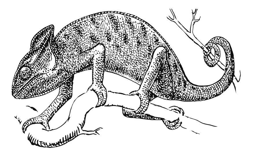 dibujo para colorear camaleón  img 15741