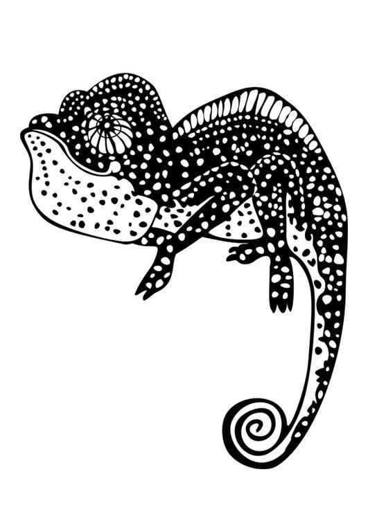 Camaleon Dibujo