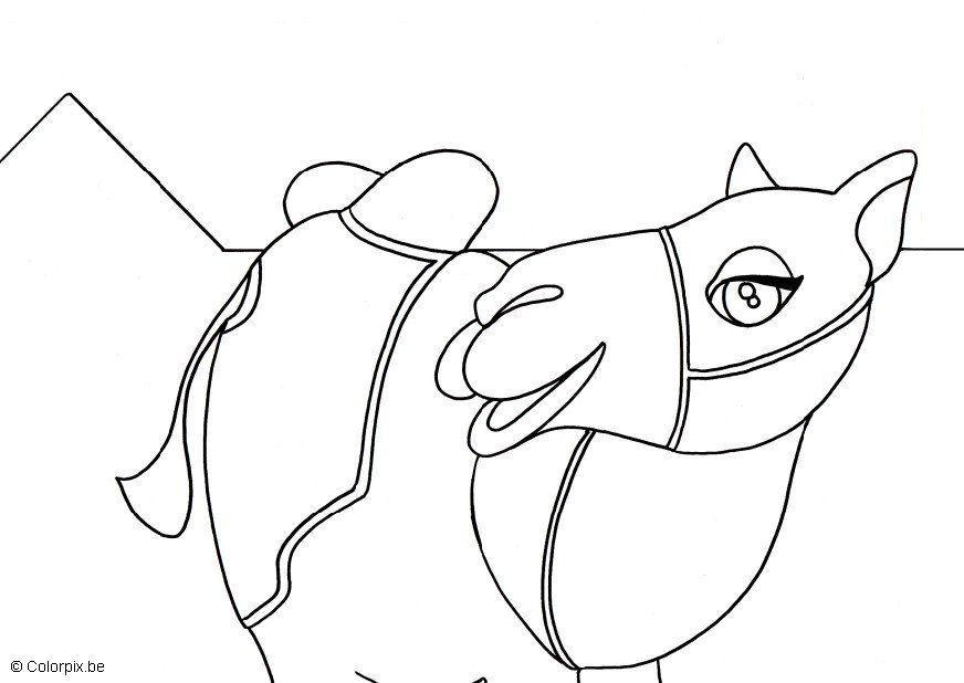 Dibujo para colorear Camello - Img 5664