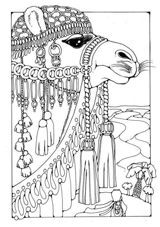 Dibujo para colorear camello - Img 19598