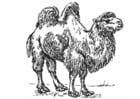 Dibujo para colorear Camello