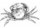 Dibujo para colorear cangrejo