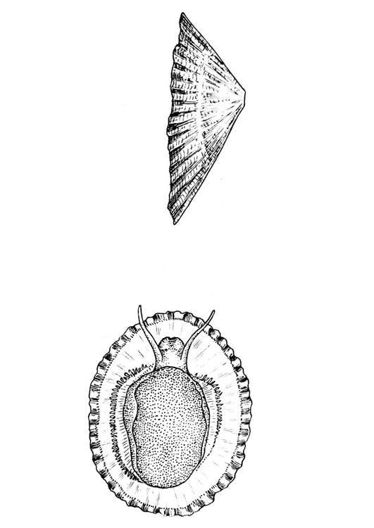 Dibujo para colorear caracol - caracola - Img 18870